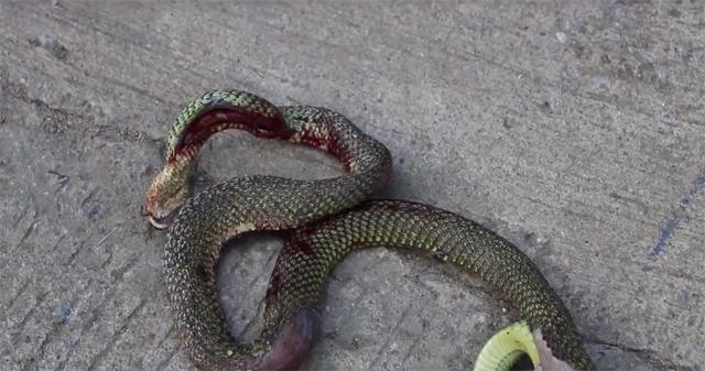 ข่าวจังหวัดพิษณุโลก ข่าวสดวันนี้ ข่าวไฟไหม้ งูเขียว