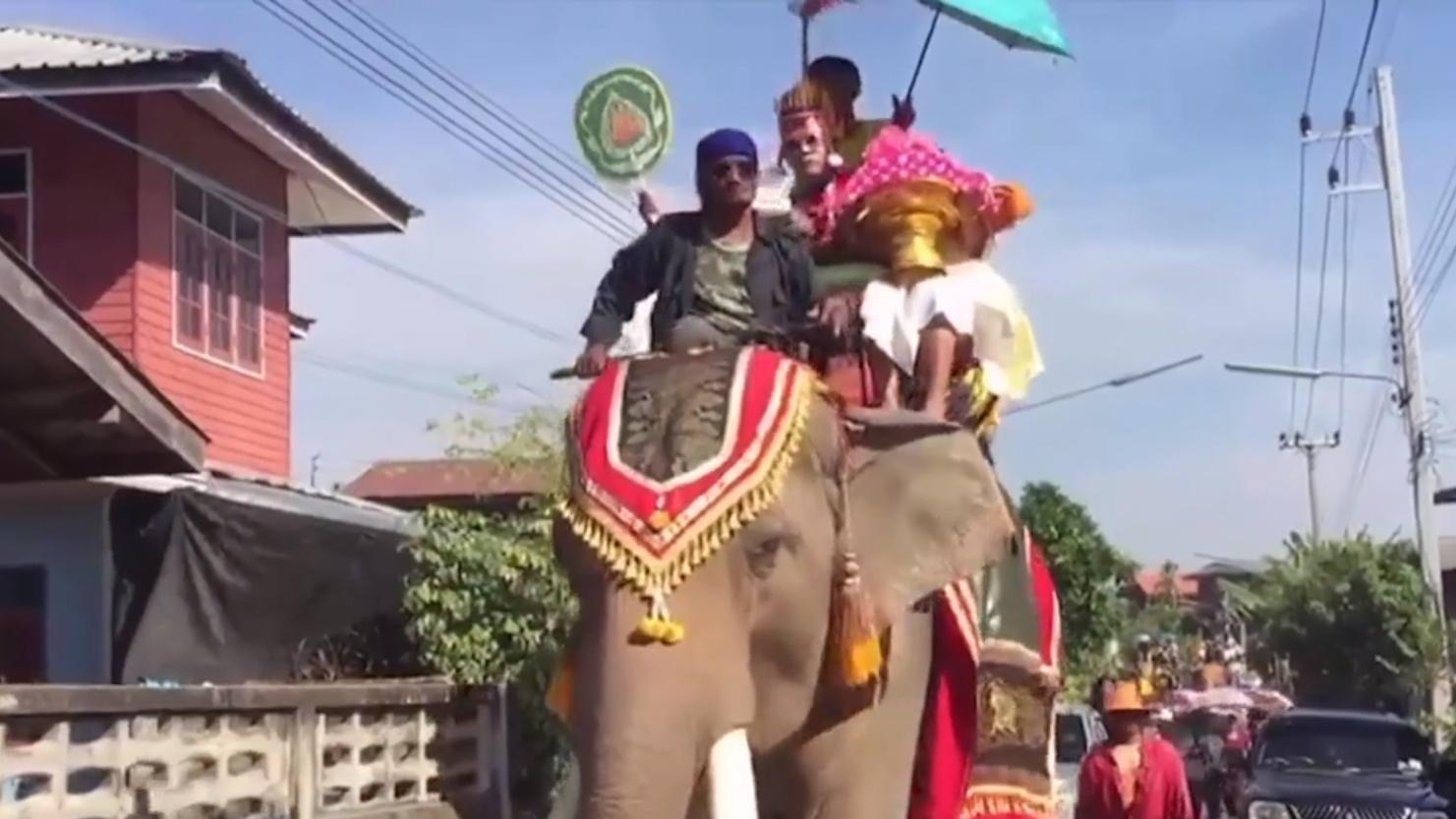การบวชนาคช้าง ขบวนแห่นาค ข่าวMono29