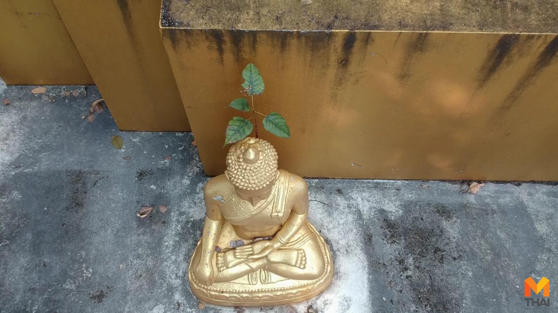 ข่าวภูมิภาค ต้นโพธิ์ พระพุทธรูปสิงห์ 1 วัดป่าลานคำ