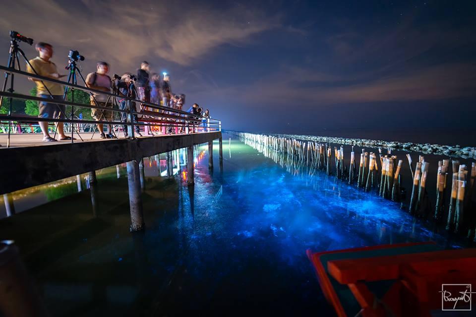 ที่เที่ยวสมุทรสาคร ที่เที่ยวใกล้กรุงเทพ ปรากฏการณ์ธรรมชาติ ศาลเจ้าพ่อมัจฉานุ สะพานแดง เที่ยวสมุทรสาคร เที่ยวใกล้กรุงเทพ แพลงก์ตอนเรืองแสง