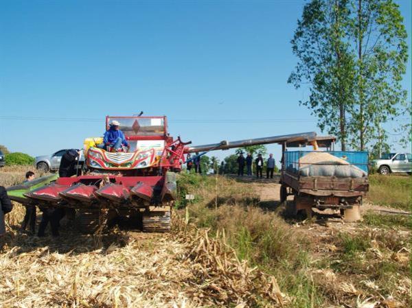 กระทรวงเกษตรและสหกรณ์ ข่าวจังหวัดอุตรดิตถ์ โครงการปลูกข้าวโพดหลังนา