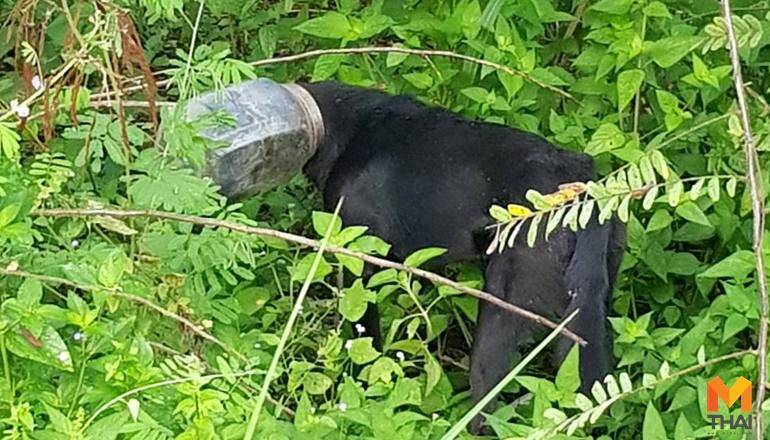 สุนัขหัวติดขวดโหล หมาหัวติดขวดโหล หัวติดขวดโหล