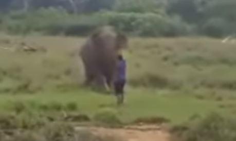 ช้างป่า ช้างเหยียบคน