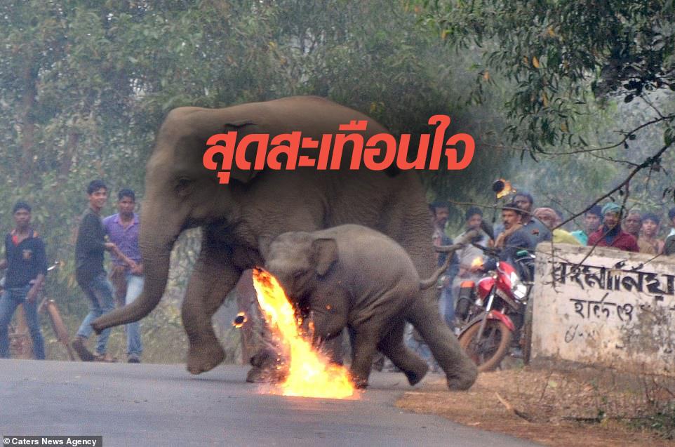ข่าวสดวันนี้ ปาลูกไฟใส่ช้าง อินเดีย