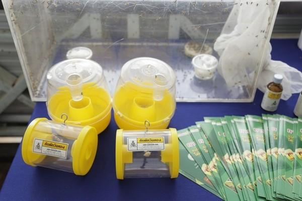 กรมส่งเสริมการเกษตร เทคโนโลยีแมลงเป็นหมัน แมลงวันทอง แมลงวันผลไม้