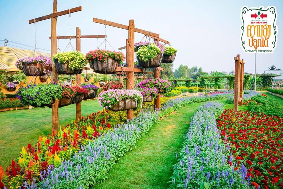 ความสุขปลูกได้ ฟิลด์เดย์ 2019 ที่เที่ยวถ่ายรูป ที่เที่ยวนนทบุรี ที่เที่ยวใกล้กรุงเทพ สถานที่ชมดอกไม้ เที่ยว ถ่ายรูปสวย เที่ยวนนทบุรี เที่ยวใกล้กรุงเทพ