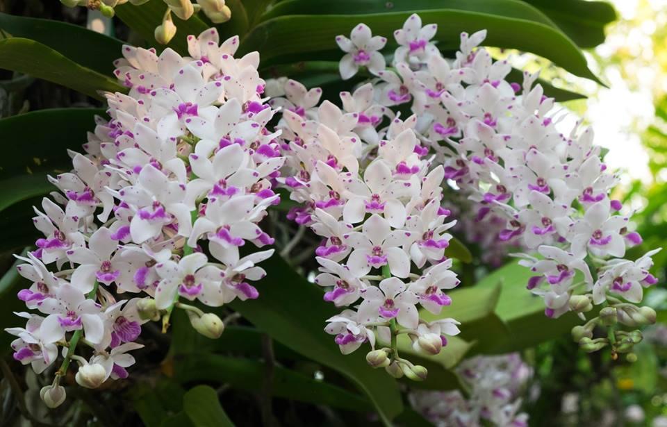 The Blooms Orchid Park ที่เที่ยวราชบุรี ที่เที่ยวสวนดอกไม้ อุทยานกล้วยไม้ เทศกาลชมช้าง เที่ยวราชบุรี