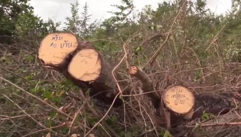 MONO29 ตัดไม้ พันตำรวจโทไพโรจน์ เมืองสุวรรณ พายุปาบึก ย้ายตำรวจ สถานีตำรวจเขาพังไกร