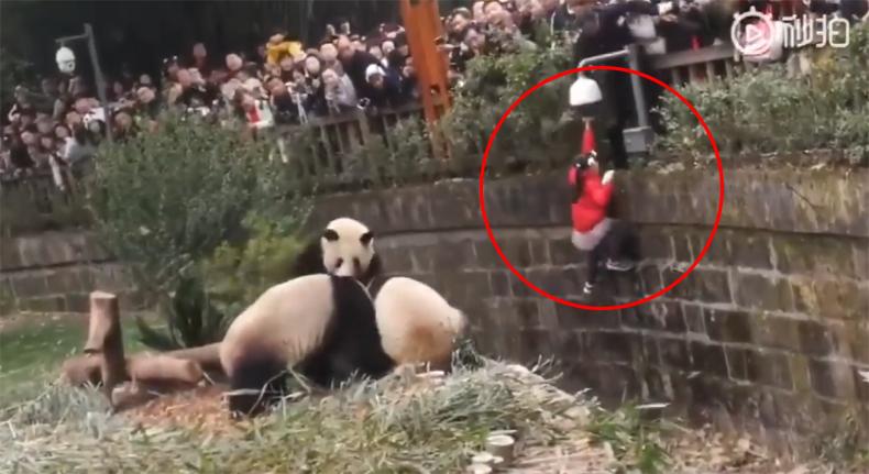 ข่าวจีน ข่าวสดวันนี้ สวนสัตว์ แพนด้า