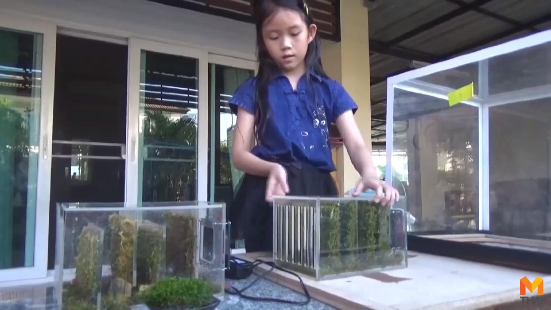 PM 2.5 ข่าวภูมิภาค ต้นมอส ปลูกมอส ฝุ่นละออง