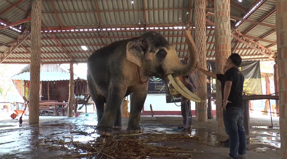 ข่าวสดวันนี้ ช้างมงคล พลายเอกชัย