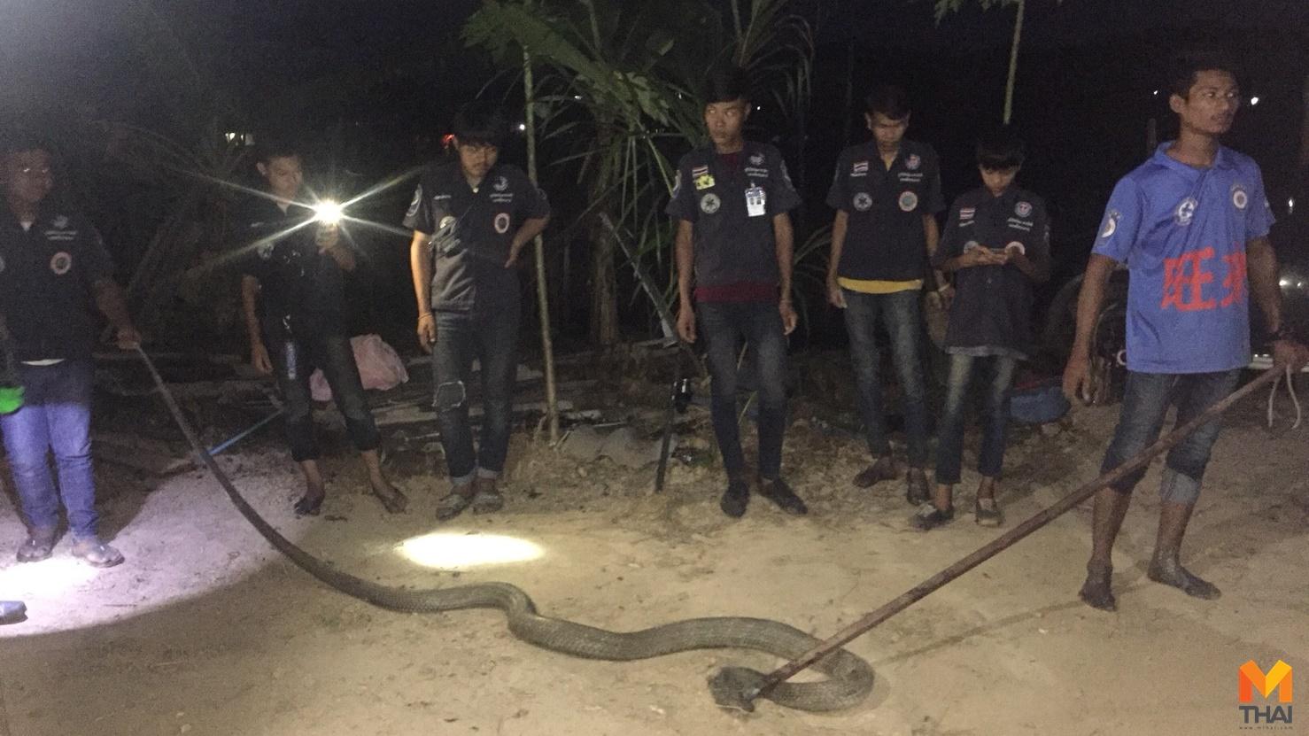 ข่าวภูมิภาค งู งูจงอาง หาปลา