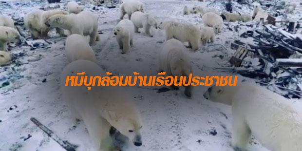 ข่าวสดวันนี้ รัสเซีย หมีขั้วโลก