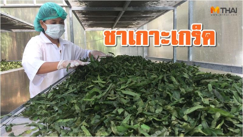 108 อาชีพทำเงิน กลุ่มเกษตรกรทำสวน ชารางแดง นนทบุรี เกษตรสร้างรายได้ เกาะเกร็ด