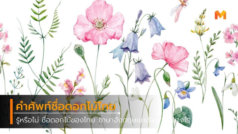 คำศัพท์ ชื่อดอกไม้ ดอกไม้ไทย ภาษาอังกฤษ เรื่องน่ารู้