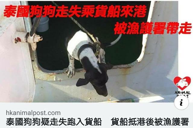 ข่าวสดวันนี้ ฆ่าหมา ฮ่องกง