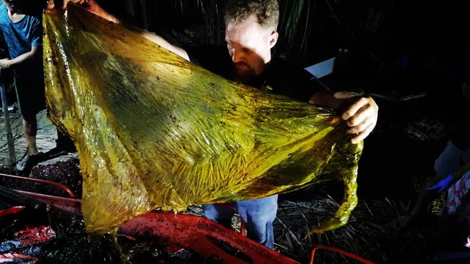 ขยะพลาสติก ข่าวสดวันนี้ วาฬ