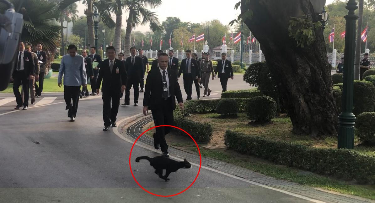 ข่าวนายกรัฐมนตรี ข่าวสดวันนี้ ประยุทธ์ จันทร์โอชา แมวดำ