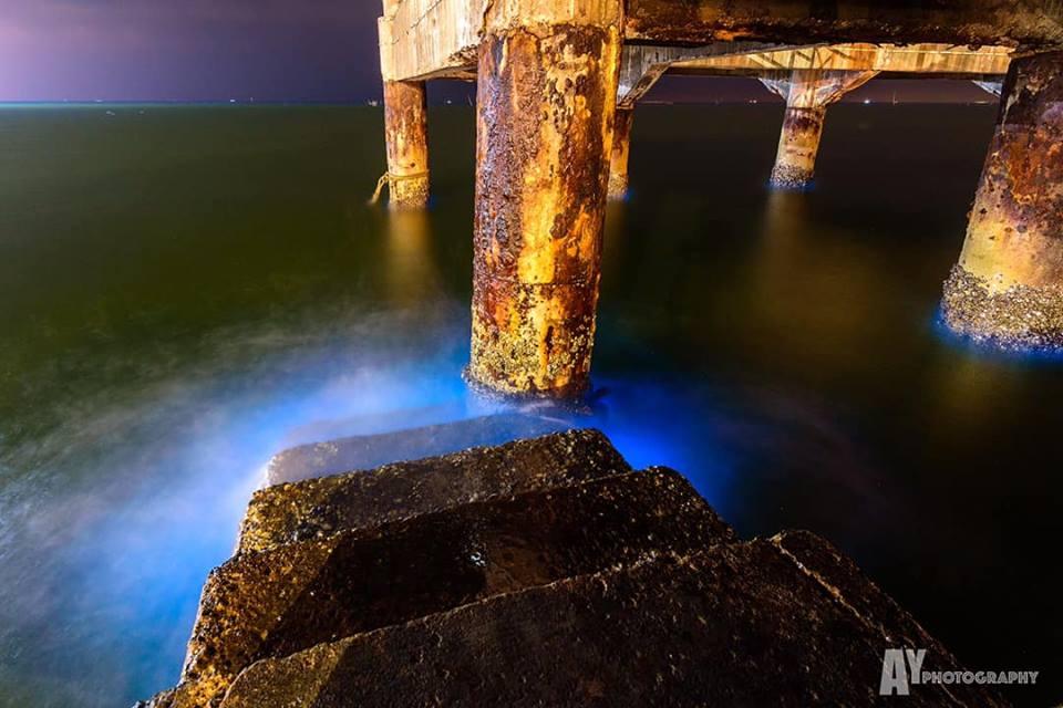 ที่เที่ยวชลบุรี ที่เที่ยวใกล้กรุงเทพ ปรากฏการณ์ธรรมชาติ สะพานราชนาวี แหลมแท่น หาดบางแสน เที่ยวชลบุรี เที่ยวบางแสน เที่ยวใกล้กรุงเทพ แพลงก์ตอนเรืองแสง