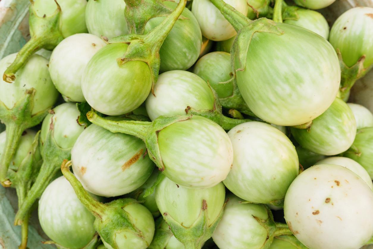 ผัก ผักพื้นบ้าน มะเขือเปราะ มะเขือเปราะ ประโยชน์ มะเขือเปราะ สรรพคุณ
