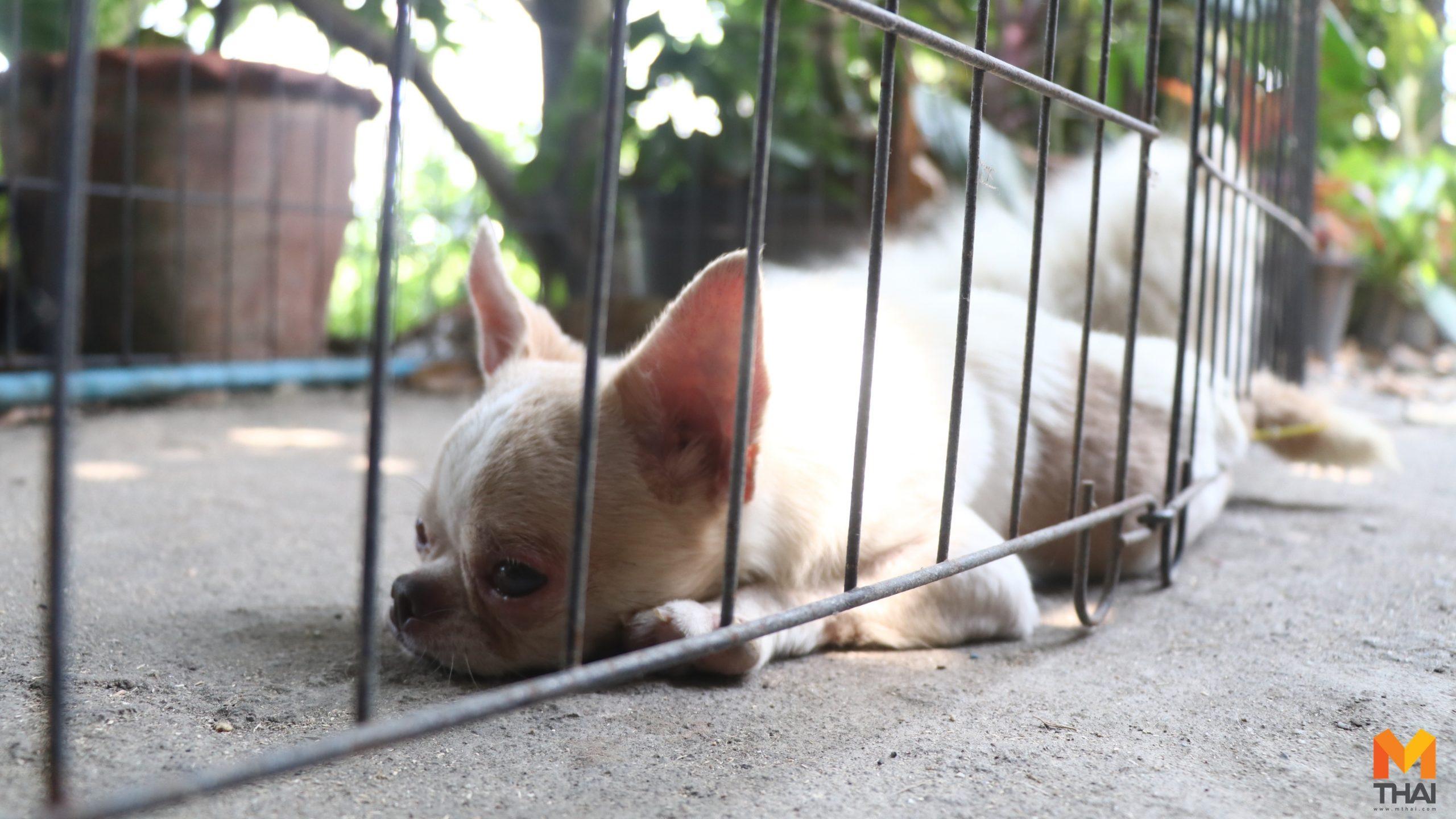Watch Dog Thailand กรมปศุสัตว์ ฟาร์มสุนัข