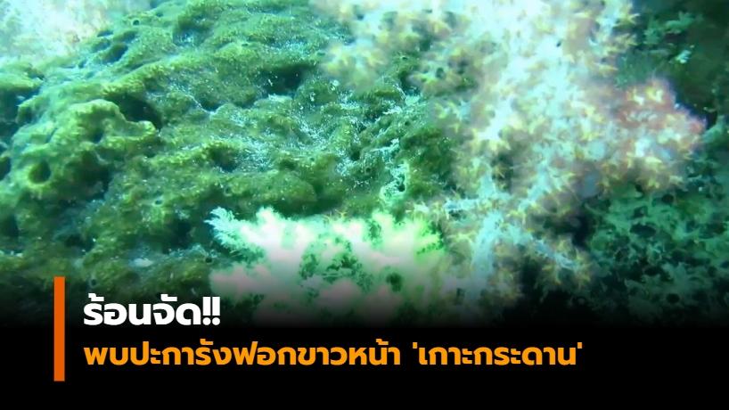 ข่าวภูมิภาค ปะการัง ปะการังฟอกขาว เกาะกระดาน