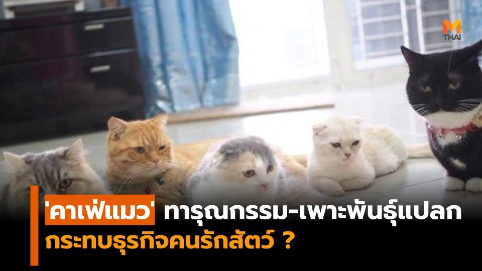 คนรักแมว คาเฟ่แมว แมว