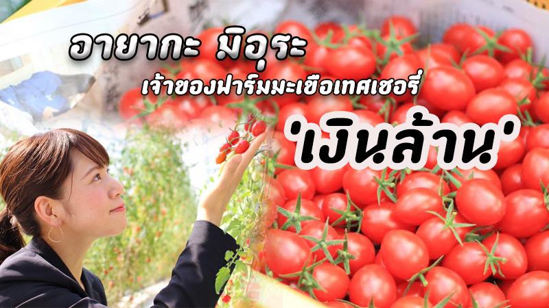#อาชีพสร้างรายได้ 108 อาชีพทำเงิน มะเขือเทศเชอรี่