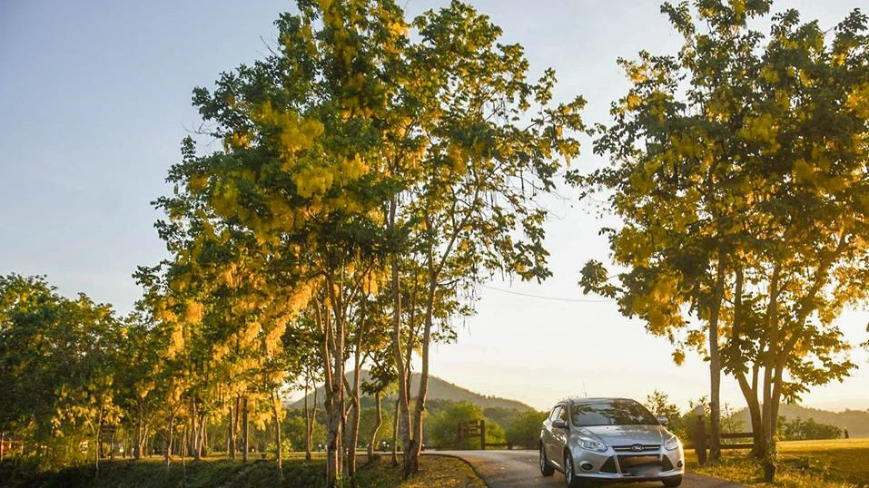 ดอกคูน ดอกคูน แก่งกระจาน ที่เที่ยวเพชรบุรี อุทยานแห่งชาติแก่งกระจาน เที่ยวเพชรบุรี เที่ยวแก่งกระจาน