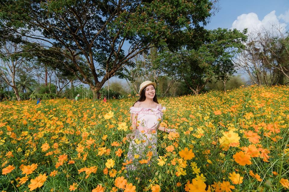 ดอกไม้ หน้าร้อน ที่เที่ยวนครนายก ทุ่งดอกดาวกระจาย ทุ่งดอกดาวกระจาย วังยาว ทุ่งดอกไม้ นครนายก สวนดอกไม้ เที่ยวนครนายก