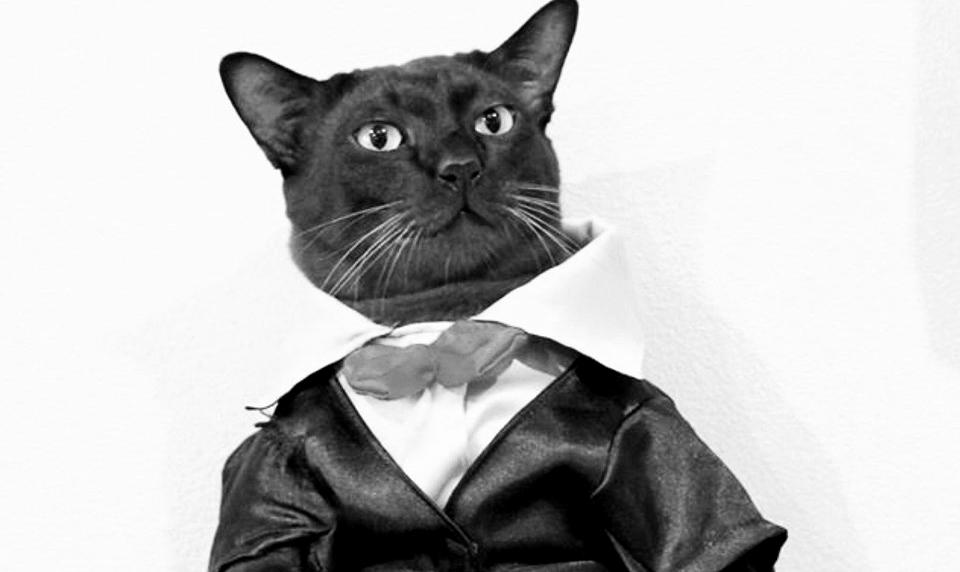 ข่าวสดวันนี้ จอนนี่แมวศุภลักษณ์ อาตแมว แมวไอดอล
