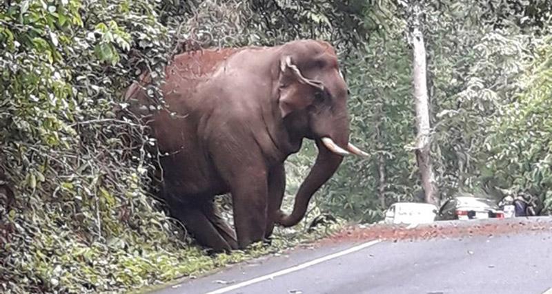ข่าวสดวันนี้ ช้างป่า ช้างอ้วน อุทยานแห่งชาติเขาใหญ่