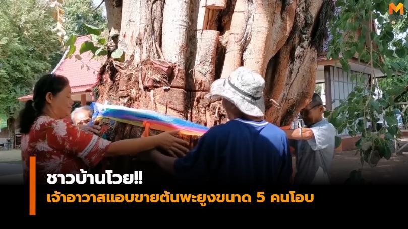 ข่าวภูมิภาค ต้นพะยูง ตัดต้นไม้ วัดหนองไผ่