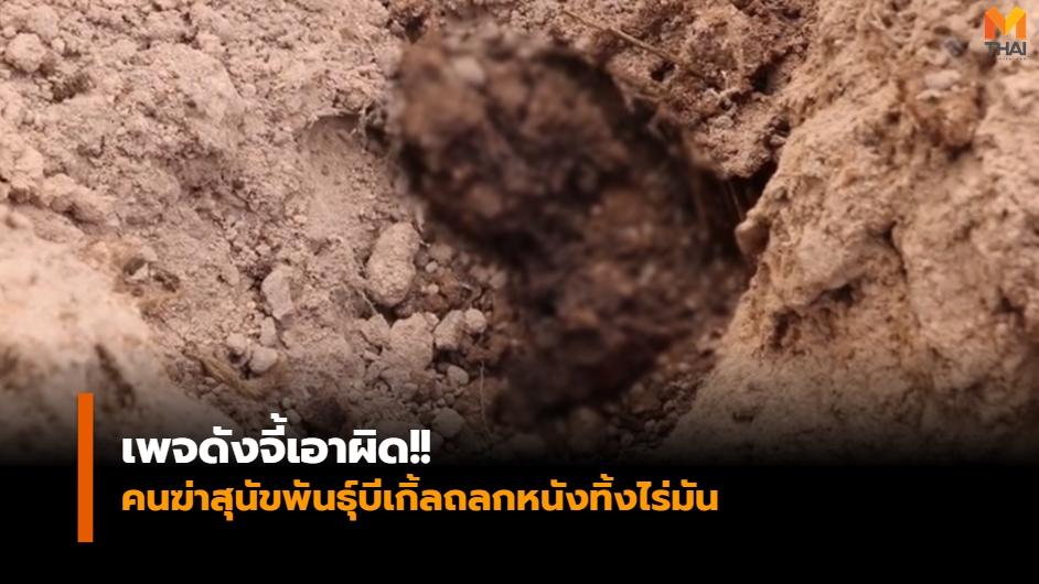 WATCHDOG THAILAND ข่าวภูมิภาค ฆ่าหมา ฆ่าหมาพันธุ์บีเกิ้ล