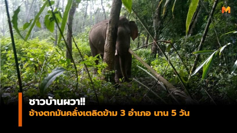 ข่าวภูมิภาค ช้างคลุ้มคลั่ง ช้างตกมัน ช้างพลายบุญ