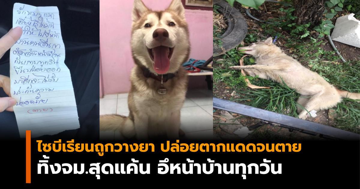 ทารุณกรรมสัตว์ สุนัข ไซบีเรียน