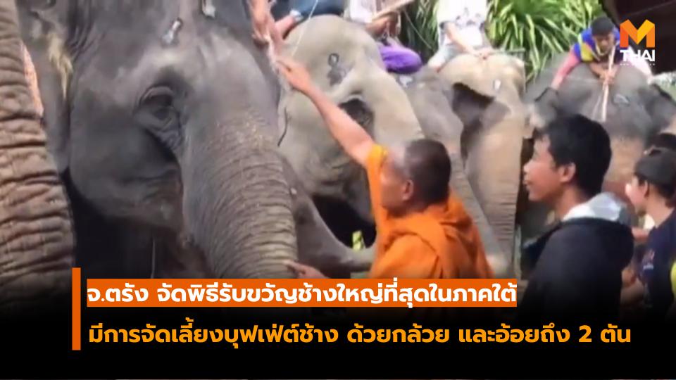 ข่าวMono29 พิธีทำขวัญช้างใหญ่ รับขวัญช้าง