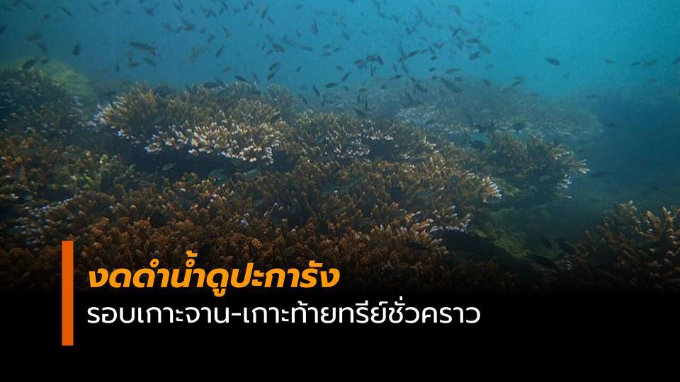 งดดำน้ำดูปะการัง เกาะจาน เกาะท้ายทรีย์