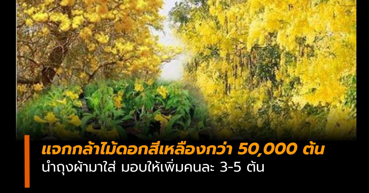 กรมป่าไม้ กล้าไม้ดอกสีเหลือง จ่านิว ประยุทธ์ จันทร์โอชา