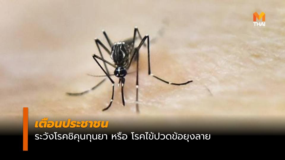 กรมควบคุมโรค ชิคุนกุนยา ยุงลาย โรคไข้ปวดข้อยุงลาย