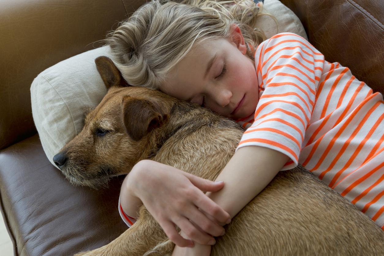 น้องหมา ป่วย สัตว์เลี้ยง สุนัข หมา