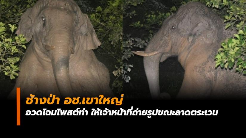ช้างนั่งโพสต์ท่า ช้างป่า เขาใหญ่