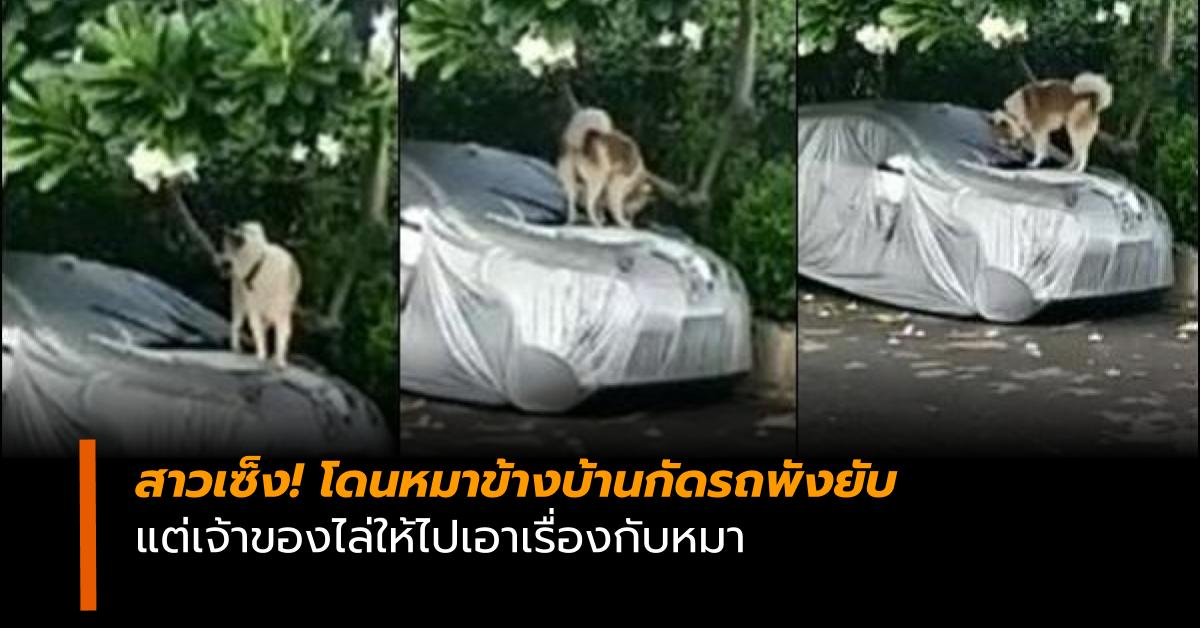 หมากัดรถ