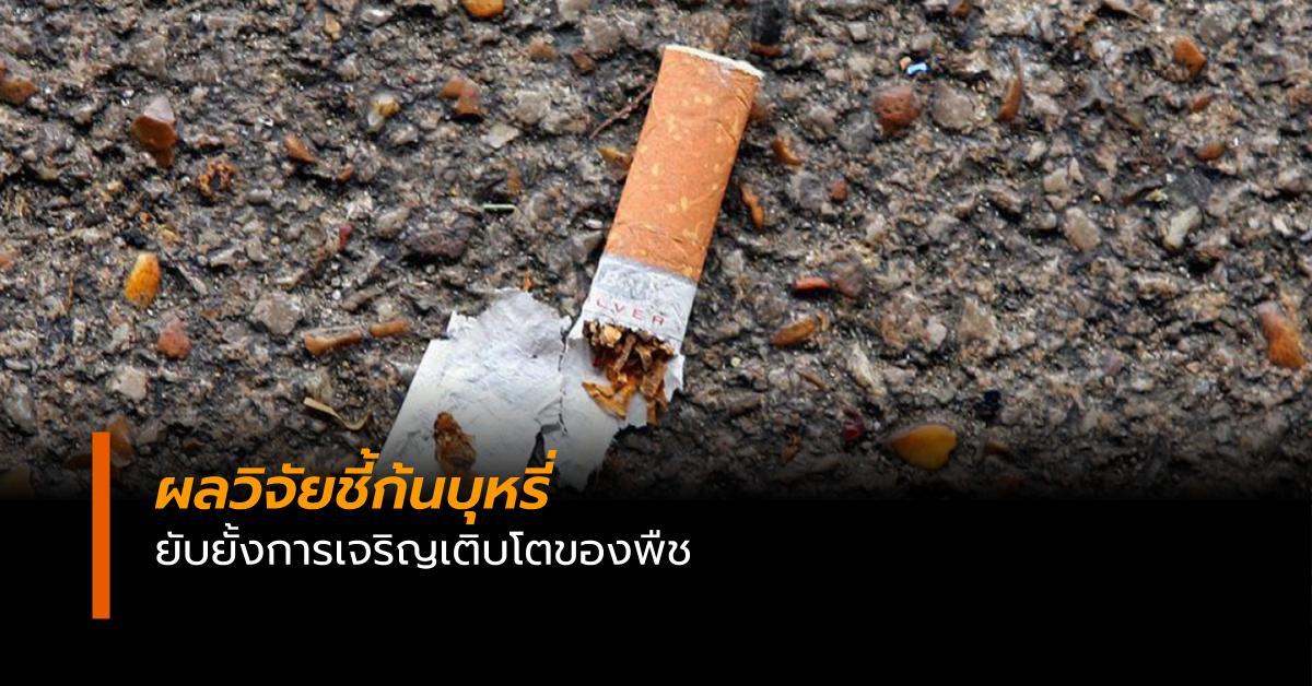 ก้นบุหรี่ ข่าวสดวันนี้