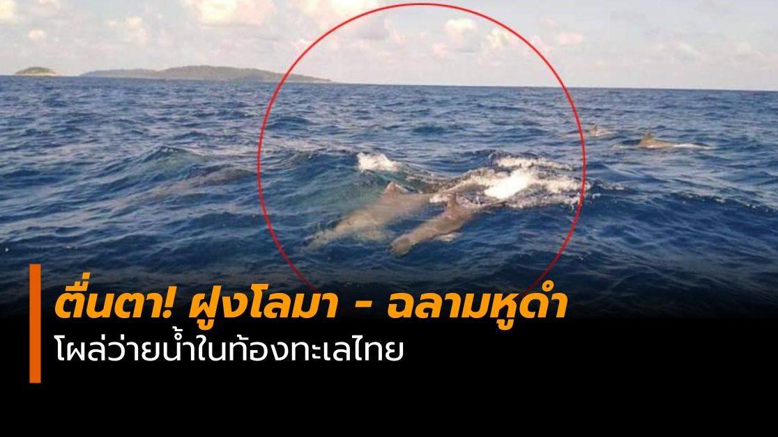 ข่าวสดวันนี้ ฉลามหูดำ