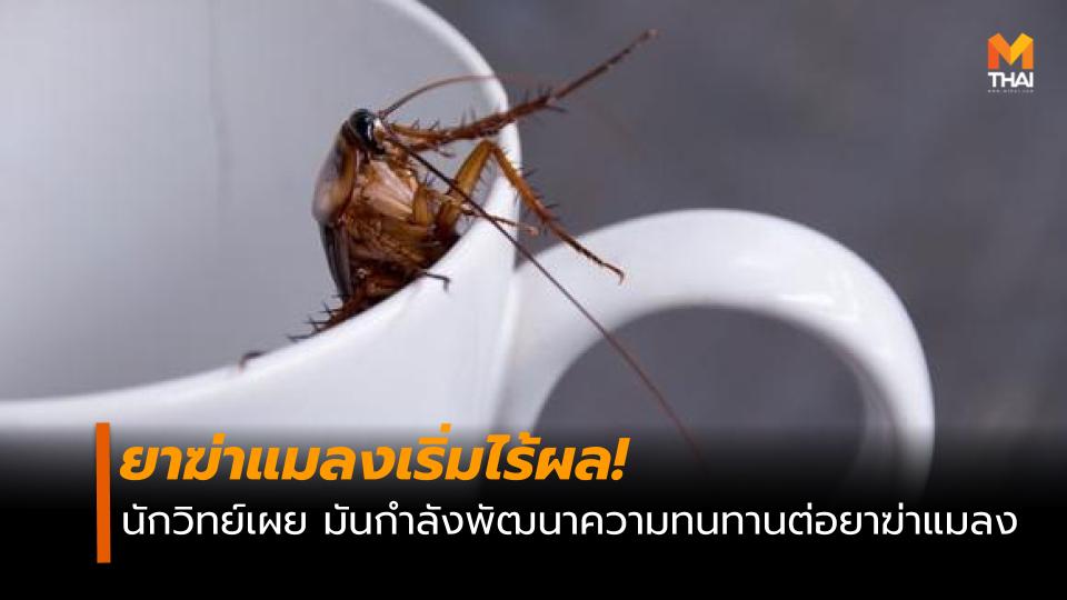 ยาฆ่าแมลง ยาฆ่าแมลงสาบ แมลงสาบ