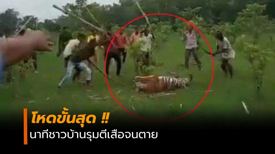ข่าวสดวันนี้ รุมตีเสือ