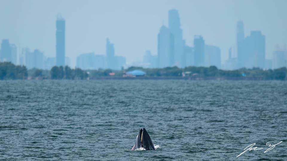 ข่าวสดวันนี้ วาฬบรูด้า