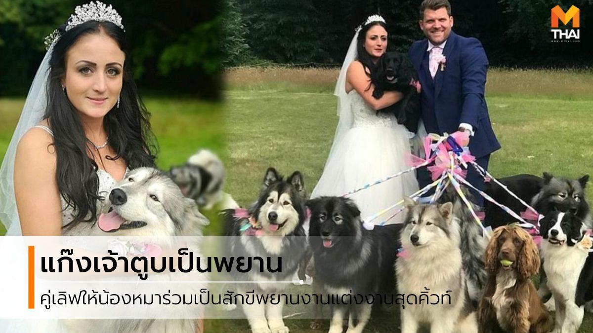 คนรักสุนัข คนรักหมา จัดงานแต่งงาน วันแต่งงาน สุนัขเพื่อนเจ้าบ่าว