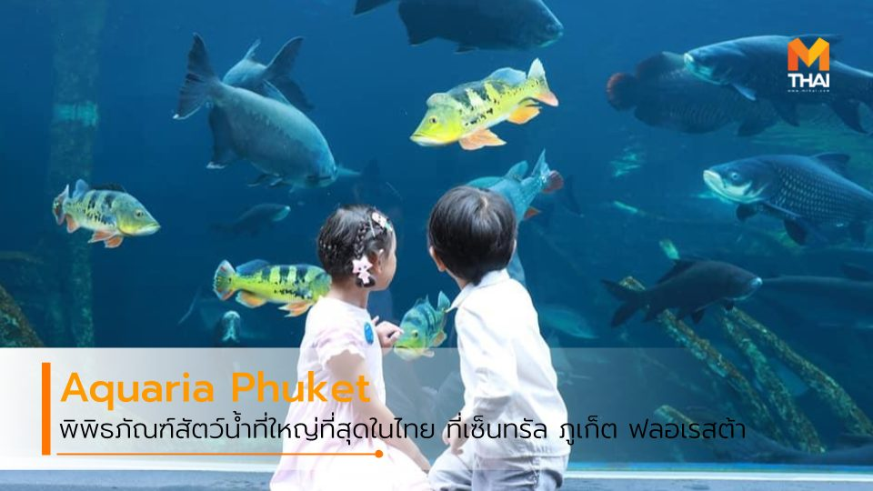 Aquaria Phuket Trick Eye Museum พิพิธภัณฑ์สัตว์น้ำ อควาเรียภูเก็ต อควาเรียม เซ็นทรัล ภูเก็ต ฟลอเรสต้า